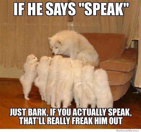 puppy advice fatherly advice weknowmemes