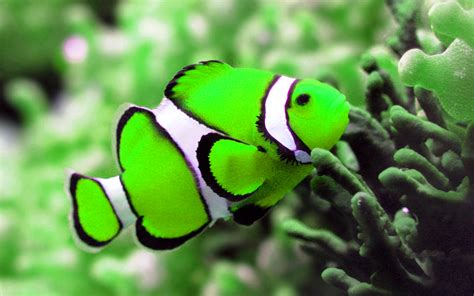 Awesome Hd Fish Tank Wallpapers Wallpapersafari
