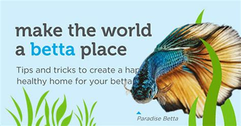 how to take care of a betta fish [infographic]