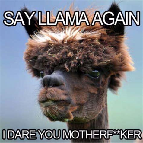 Funny Llama Memes - samuel l jackson llama