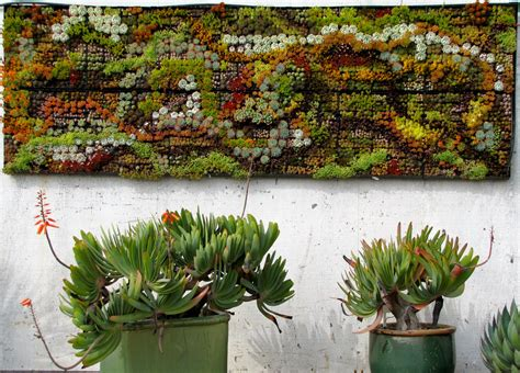 wall for gardens succulent wall