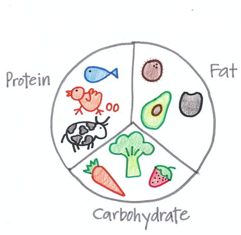 carbohydrates fats and proteins carbohydrates protein the three vital macronutrients