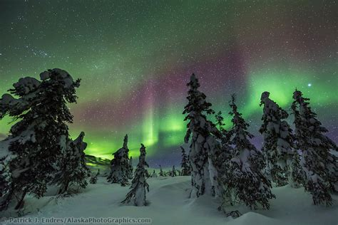 snowy alaskan cluster light tree borealis photos resources and history information