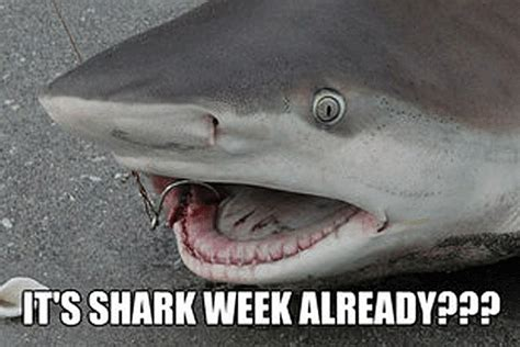 baby shark meme here come the shark week memes
