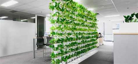 business benefits  green walls ambius australia