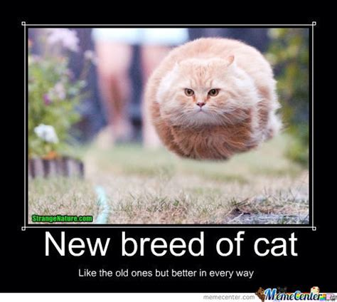 New Cat Memes - new breed of cat meme cat planet cat planet