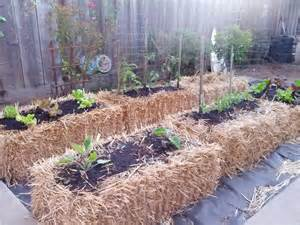 Hay Bale Garden by What Is Straw Bale Gardening