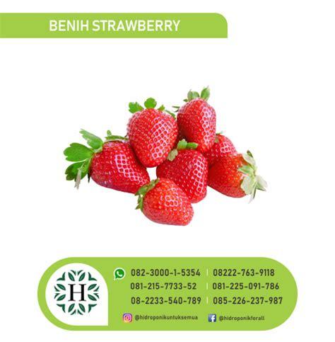Jual Benih Strawberry Hidroponik benih sayuran page 3 jual alat bahan media hidroponik