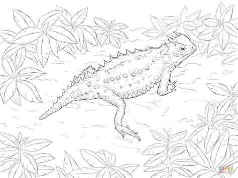 a book coloring page supercoloring com horned lizard coloring page coloring home