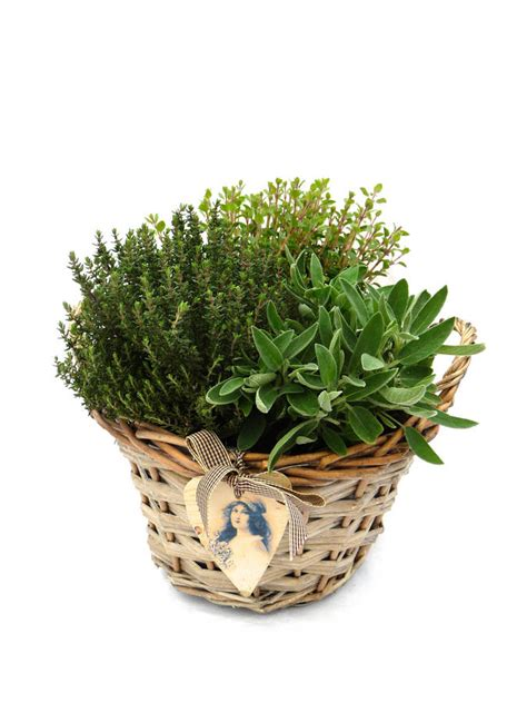 christmas plant gift idea s vintage herb basket by