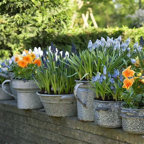 galvanized garden containers galvanized metal tubs buckets pails as planters