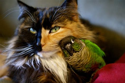 15 of the strangest cat laws ever made purrfect cat breeds