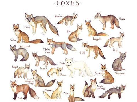 fox breed what fox breed are you playbuzz