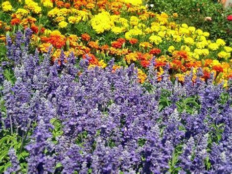 piante da appartamento con fiore fiori e piante piante appartamento