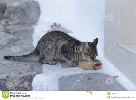 Cat Dreams Of Fish Birds Milk by Cat Milk Royalty Free Stock Photo Cartoondealer