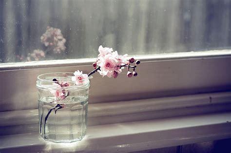 lovely like blossom cute gt beautiful beautiful flowers blossom cherry blossom