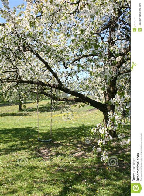 swinging cherries swing on a tree stock photos image 9156223