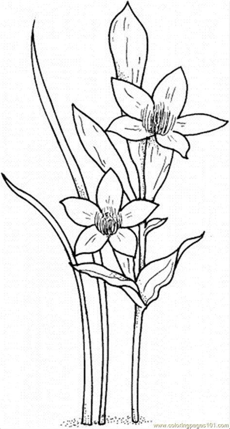 narcissus flower coloring page free coloring pages of flowers details
