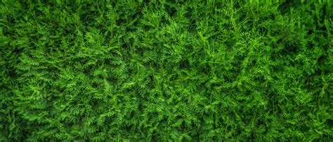 wallpaper daun merambat gambar alam hutan abstrak menanam kayu halaman