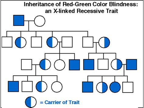 is color blindness dominant or recessive is color blindness recessive 28 images solved green