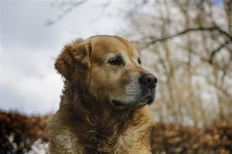 do golden retrievers smell breeds 5 of the best sporting canines