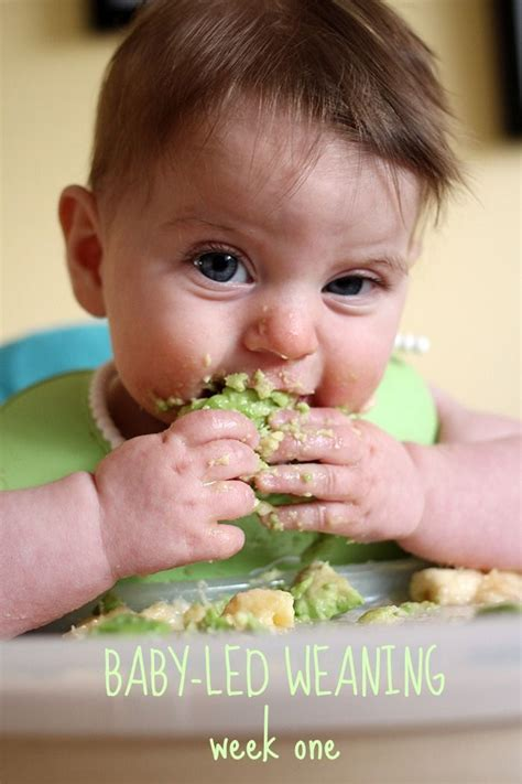 Real Food For Babies And Toddlers Baby Led Weaning And Beyond Ebook 67 best baby food images on baby foods