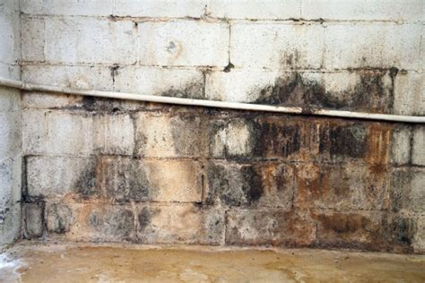 mold on basement walls cinder block access basement systems basement waterproofing in central pa