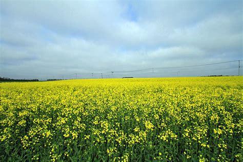 Bac A 5791 農産物こうやって作ってます 2011年05月