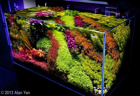 216 best images about aquascape on aquarium