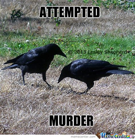 Crow Meme - a group of crows is called a murder by jazzchameleon