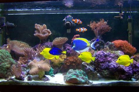 Pakan Udang Aquarium memilih jenis ikan air laut asin akuarium ikan
