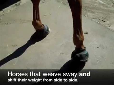 Why Do Horses Start Cribbing by Why Do Horses Weave Equine Ink