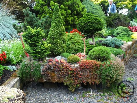 dwarf conifer garden design native home garden design