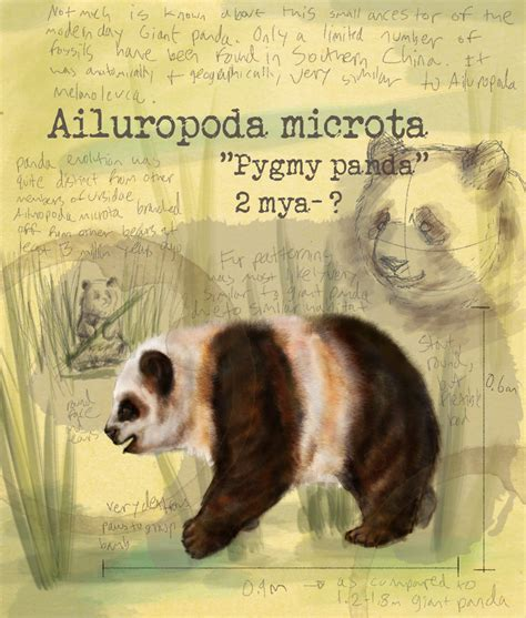 ailuropoda microta dinopedia fandom powered  wikia