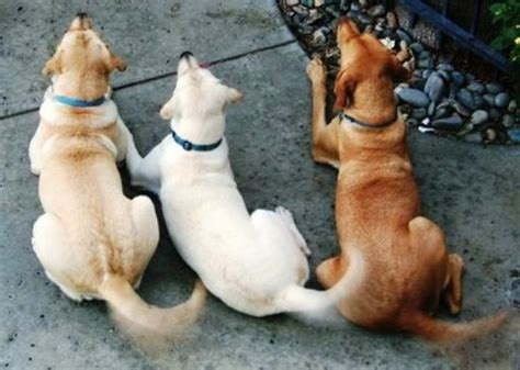 wagging puppies wait my s not wagging its because it s happy siowfa12 science in our