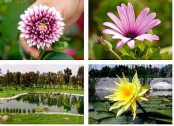 imagenes de animales y plantas de mexico la jornada ecologica