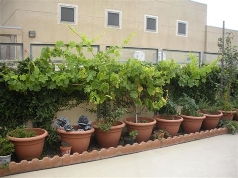 rooftop vegetable garden photos