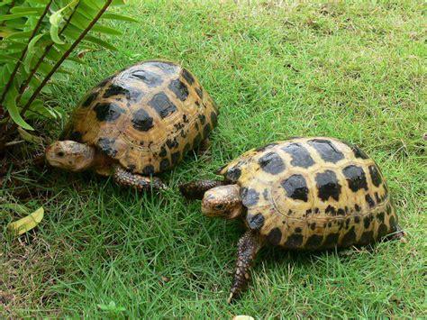 Seprai Kura Kura 1 10 hewan dengan umur terpanjang bahkan abadi random info