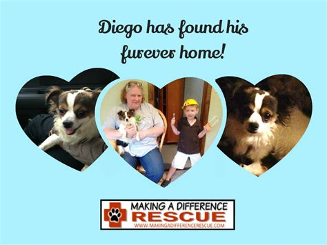 a difference rescue diego has found his forever home