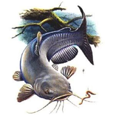 pin  roberta lenhof  clipart   fish art