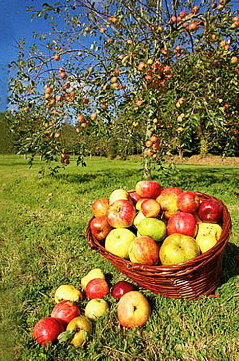 green apple great english 8853004231 they re delicious diverse and glorious symbols of our