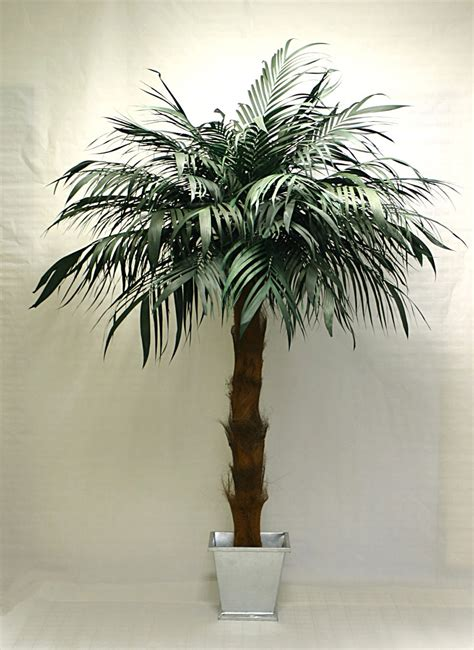 yucca palme schlafzimmer palmen f 252 rs wohnzimmer zimmerpalmen bilder welche sind