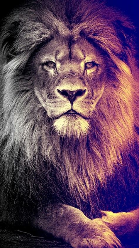 lion wallpaper ideas  pinterest lion