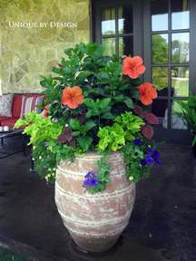 Hibiscus In Planters by Pin By Susan Wilheit On Patio Ideas