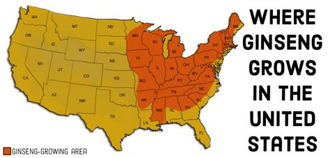 kentucky ginseng map where in the united states does ginseng root grow