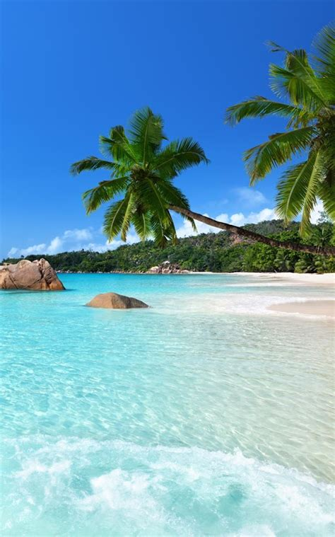 google images beach tropical beach live wallpaper android apps on google play