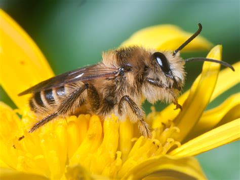 zombie bees are a thing literally humor