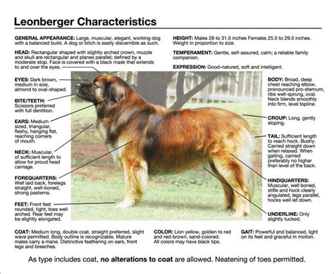 breeds and personalities leonberger personality breeds picture