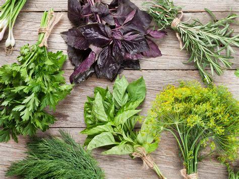 growing herbs in the garden valley news how to grow herbs saga