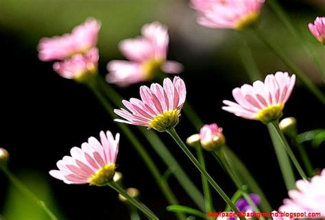 cute plants flowers cute images wallpapers background